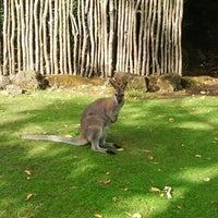 Photo prise au Auckland Zoo par Hesti le2/27/2013