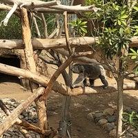 Foto scattata a Koala Exhibit da Jeff V. il 6/29/2018