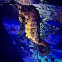 Photo prise au Maui Ocean Center, The Hawaiian Aquarium par Trisha Kehaulani W. le7/21/2013