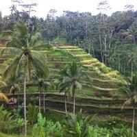 Снимок сделан в Tegallalang Rice Terraces пользователем Dmitry B. 11/14/2012