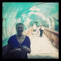 รูปภาพถ่ายที่ Predators Tunnel โดย Dhyana C. เมื่อ 2/8/2013