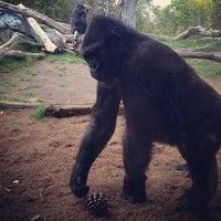 4/16/2013 tarihinde Nick J.ziyaretçi tarafından San Diego Hayvanat Bahçesi'de çekilen fotoğraf