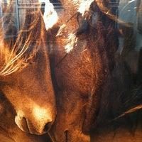 Foto scattata a The Wild Horses of Sable Island da Karen S. il 10/26/2012