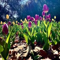 3/14/2021 tarihinde Doug d.ziyaretçi tarafından Descanso Gardens'de çekilen fotoğraf