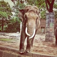 Foto diambil di Zoologischer Garten Berlin oleh Dirk pada 6/29/2013