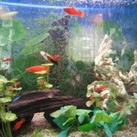 12/1/2012에 Carlos A.님이 Restaurant Flor Oriental에서 찍은 사진