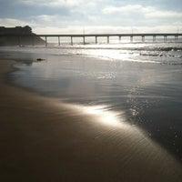 ocean beach pier cafe 5091 niagara ave