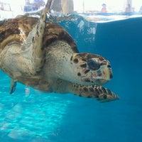7/5/2013 tarihinde Ryan F.ziyaretçi tarafından Texas State Aquarium'de çekilen fotoğraf