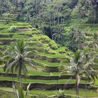 Снимок сделан в Tegallalang Rice Terraces пользователем Ilja P. 3/15/2013