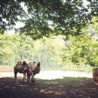Das Foto wurde bei Volkspark Hasenheide von Brian P. am 5/15/2013 aufgenommen