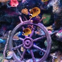 Foto diambil di SEA LIFE Grapevine Aquarium oleh Michelle K. pada 8/29/2013