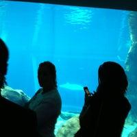 Georgia Aquarium Parking Deck - Downtown Atlanta - 4 tips ...