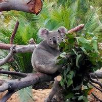6/8/2013 tarihinde Ken W.ziyaretçi tarafından San Diego Hayvanat Bahçesi'de çekilen fotoğraf