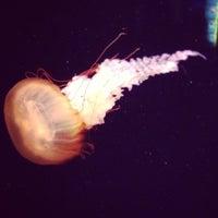 Foto tomada en Oklahoma Aquarium por David M. el 3/19/2013