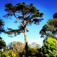 Снимок сделан в San Francisco Botanical Garden пользователем djb 12/2/2012