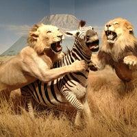 3/11/2013 tarihinde Jacziyaretçi tarafından Las Vegas Natural History Museum'de çekilen fotoğraf