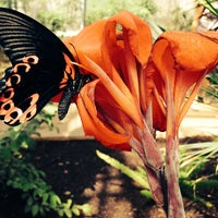 Photo taken at Butterfly Wonderland by Jac on 9/21/2013