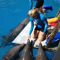 Foto scattata a Miami Seaquarium da Maria Mirabella il 4/9/2013