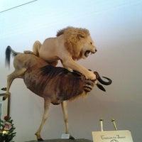 Das Foto wurde bei Las Vegas Natural History Museum von Amber S. am 12/9/2012 aufgenommen