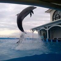 Foto tomada en Acuario de Veracruz por Alex B. el 11/5/2012