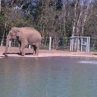 Das Foto wurde bei Elephant Odyssey von Ahmed A. am 3/15/2013 aufgenommen
