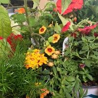 6/9/2013에 Natalie A.님이 Nick's Garden Center & Farm Market에서 찍은 사진