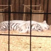 12/23/2012 tarihinde D's.  🌞🐎⛵ B.ziyaretçi tarafından Wild Adventures Theme Park'de çekilen fotoğraf