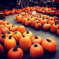 Снимок сделан в Union Square Greenmarket пользователем Anne A. 10/27/2012