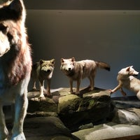 8/31/2014에 Bill H.님이 Mashantucket Pequot Museum and Research Center에서 찍은 사진