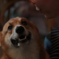 Снимок сделан в Dog in Town пользователем Xiaolong K. 9/16/2018