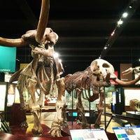 Das Foto wurde bei University of Michigan Museum of Natural History von Brett S. am 12/12/2012 aufgenommen
