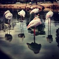 Das Foto wurde bei Polonezköy Hayvanat Bahçesi ve Doğal Yaşam Parkı von deniz k. am 10/13/2013 aufgenommen