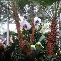 Das Foto wurde bei Volunteer Park Conservatory von Anthonio P. am 4/12/2013 aufgenommen
