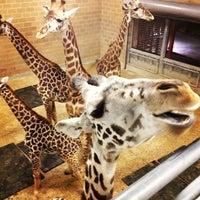 Снимок сделан в Houston Zoo пользователем Claire W. 2/24/2013