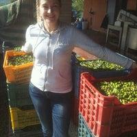 Foto tirada no(a) Frantoio Tomei por Alessandro C. em 11/10/2012
