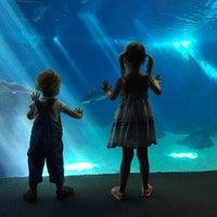 Photo prise au Maui Ocean Center, The Hawaiian Aquarium par Maui Hawaii le2/11/2016