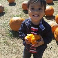 berry pumpkin patch woodstock ga