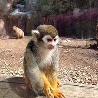 4/11/2013에 Mrs.P님이 Cameron Park Zoo에서 찍은 사진