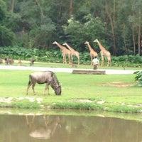 Das Foto wurde bei Xiang Jiang Safari Park, Guangzhou von Sarjis💫 am 10/7/2013 aufgenommen