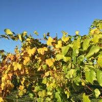 10/29/2014 tarihinde Jan C.ziyaretçi tarafından Harvest Ridge Winery'de çekilen fotoğraf