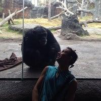 1/31/2014 tarihinde Jenn P.ziyaretçi tarafından Chimpanzee Exhibit'de çekilen fotoğraf