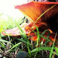Das Foto wurde bei Restaurante Panoramica Golf von Marc P. am 10/26/2012 aufgenommen