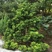 Ornamental Conifers Bronx Park Bronx Ny