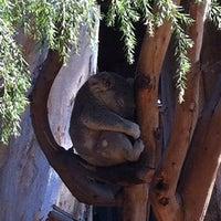 Foto scattata a Koala Exhibit da Rafael C. il 10/17/2011