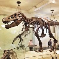 Foto scattata a American Museum of Natural History da Jenn il 10/14/2013