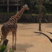 Photo prise au Auckland Zoo par Dan W. le10/25/2012
