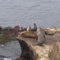 Снимок сделан в La Jolla Beach пользователем Rosicleia S. 12/25/2012