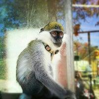 Das Foto wurde bei Polonezköy Hayvanat Bahçesi ve Doğal Yaşam Parkı von Bikem Y. am 4/13/2013 aufgenommen