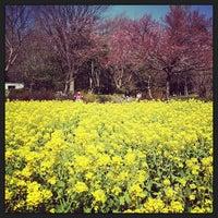 3/16/2013にTakahiro Y.が蘆花恒春園 (蘆花公園)で撮った写真
