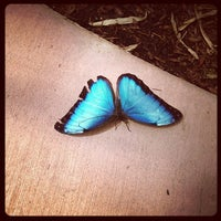 Photo taken at Butterfly Wonderland by Sara d. on 6/22/2013
